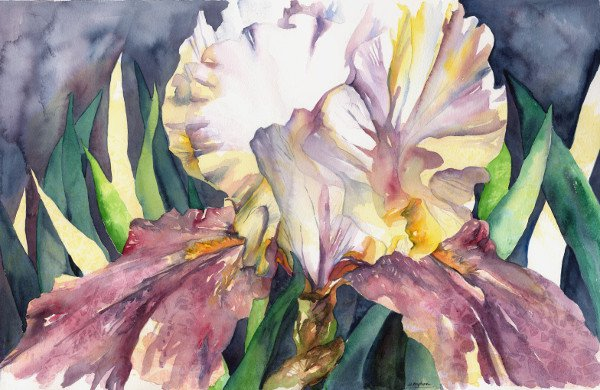 Watercolor White Purple Iris Painting