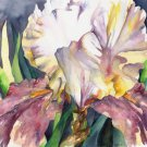 Free Shipping Watercolor White Purple Iris Painting