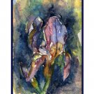 Watercolor Dwarf Iris Cards