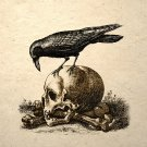 Crow On A Skull Art Print Gothic Macabre Memento Mori
