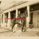 c.1916 Beverly Bayne Horse Metro Bushmanor DW Photo