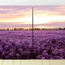 Stretched Canvas Print Landscape Farms of Lavender Set of 4 - K053