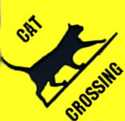 "corrugated Sign ""CAT CROSSING"""