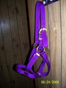 Newborn Calf  (Cow) Halters USA Made All Metal Hardware