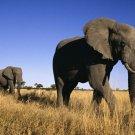 """African Elephant"" Magic Green Verdite Sculpture/Art Handmade in Zimbabwe! #2"