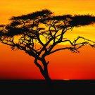 "22 Key Ethnic ""Voice of the Ancestors"" Thumb Piano Kalimba Sanza Made ~ Zimbabwe"