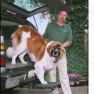 Otto Step Dog Pet  Ramp  SUV  Pick Up Truck Van Hitch