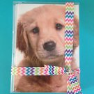 Golden Retriever Greeting Cards 10 Pack Dog Pet All Occasion Blank Message Puppy