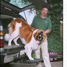 Otto Step Dog Pet  Ramp  SUV  Pick Up Truck Van Hitch Large Dog Receiver Insert