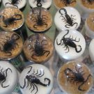 1 Black Scorpion Pen Ball Point .7mm Inscect Specimen  Real Insect Genuine 1 Pen