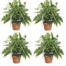 "Set of 4 - 28"""" Large Mixed Silk Fern Bush - pbx182-gr"