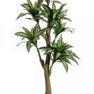 6' Giant Dracaena Silk Tree - ltd066-gr