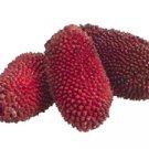 "3"""" Artificial Jack Fruit in Bag (3 ea./bag) Burgundy - vaj395-bu"