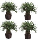 """Set of 4 - 24"""""""" Phoenix Silk Palm Trees in Wood Containers - ltp428-gr"""