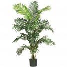 6' Paraidise Palm - 5260