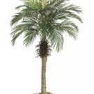 Set of 2 - 5' Silk Phoenix Palm Trees - lpp505