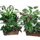 """15"""""""" Assorted Tropical Silk Garden Plants in Pot Assortment of 4 Styles - lpx330-asst"""