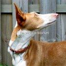 KENYA MAASAI MASAI BEADED LEATHER DOG COLLAR - MEDIUM 18