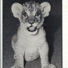 1986 UNIVERSITY OF ARKANSAS AT PINE BLUFF GOLDEN LION