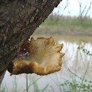 "Nature Seascape Water PHOTOGRAPH  Photo  8X10"" & BIGGER"