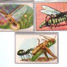Vintage Insects Nature Wildlife 3  Picture Cards Lot