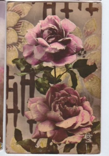 Rose Flower Nature Postcard Vintage