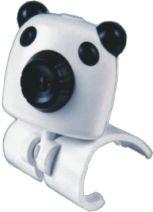 CAM--N023--White Dog