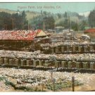 Color Postcard  Pigeon Farm Los Angeles  California