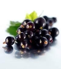 Black Currant Perfume Oil