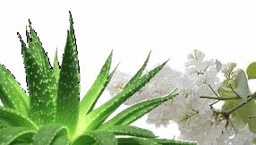 Aloe & White Lilac Scented Hand Sanitizer