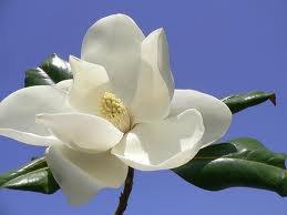 Magnolia Scented Hand Sanitizer