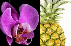 Pineapple Orchid Scented Hand Sanitizer
