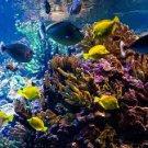 Paradise Reef Scented Kona Coffee Exfoliating Face Scrub