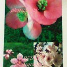 Blossom Collage photo Print 8 x 10 new