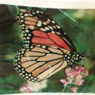 Mouse Pad Monarch Butterlfy 9 x 7 photo computer new