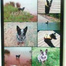 Australian Cattle Dog puppy collage photo print 8 x 10 new