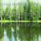Mountain Forest Pond 8 x 10 photo print new
