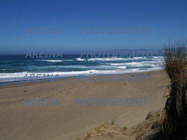 Bodega Bay view 8 x 10 photo print new