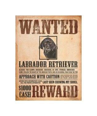 Wanted - Labrador Retriever - Reward Tin Sign