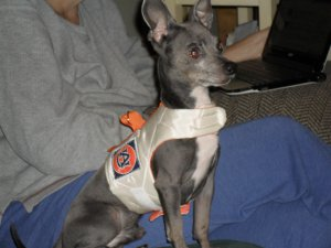 Dog Harness Vest for Small Dogs