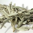White Sage  (Salvia apiana) Smudge Sage Cleansing , Protection Celtic, Wicca
