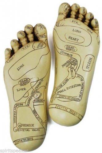 Reflexology Feet Learning Model Learn Healing Reiki Relaxation Massage