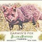 2011 Topps Allen and Ginter Mini Animals in Peril #AP4 Darwin's Fox