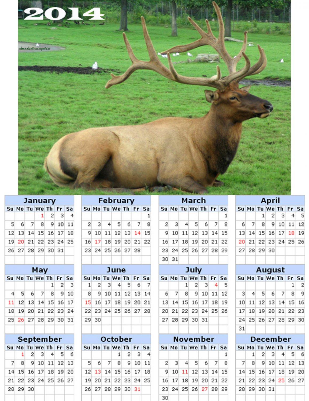 2014 calendar toolbox magnet refrigerator magnet Deer #1