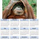 2014 calendar toolbox magnet refrigerator magnet Primates #2
