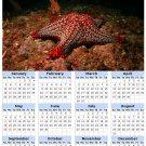 2014 calendar toolbox magnet refrigerator magnet Ocean Life #7