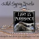 """Cat sweet Grey KITTEN Eyes Life is Purrfect 1"""" Glass Tile Metal Pendant Necklace"""