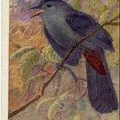 Beautiful Vintage CATBIRD BIRD Postcard VP-5463