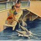 Feeding Dolphins in Marineland Florida Postcard VP-4882