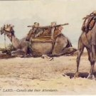 A/S Tuck Oilette The Holy Land Camels Postcard VP-1520